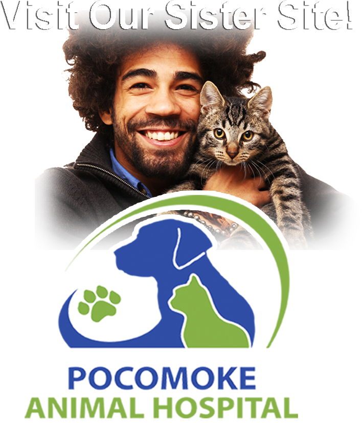 Visit Our Sister Site, Pocomoke Animal Hospital